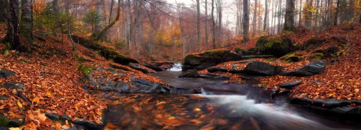 """Осенний тур """"В Карпаты за белыми грибами"""""""