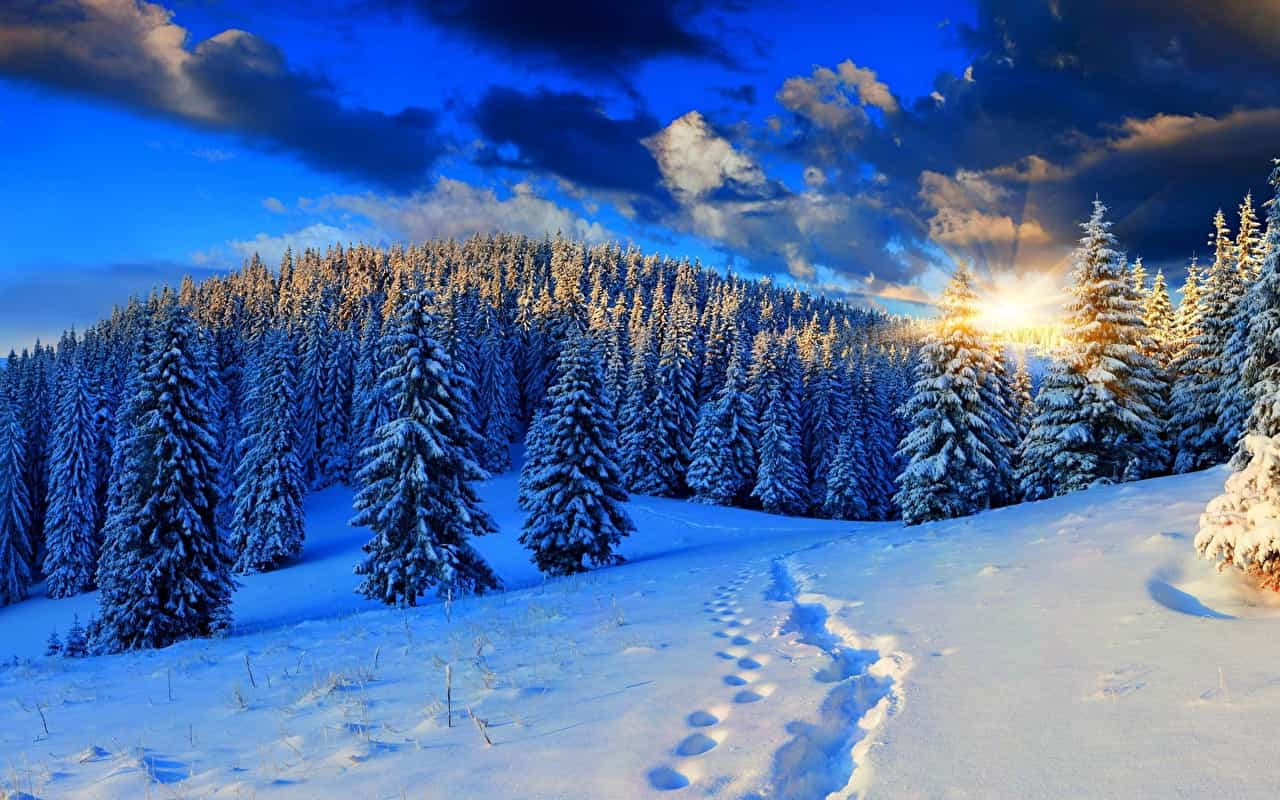 Sunrises_and_sunsets_Winter_Forests_Snow_Rays_of_574925_1280x800